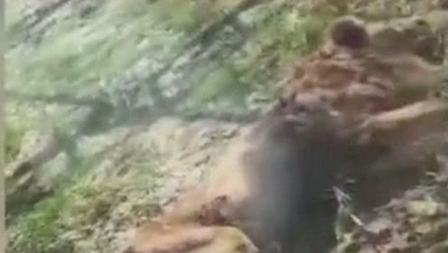 辽阳动物园两狮子来园一周被饿得骨瘦如柴,只因动物表演被禁?