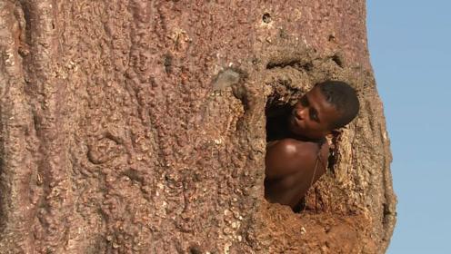 """非洲一种""""万能树"""",既能提供吃喝,还能当房子住!"""