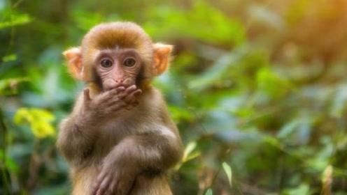 好消息!生肖猴的人9月将有好事发生,机遇难得千万别错过!
