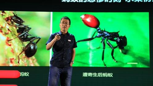"""张霜:破解""""蚂蚁上树""""背后的生态博弈"""