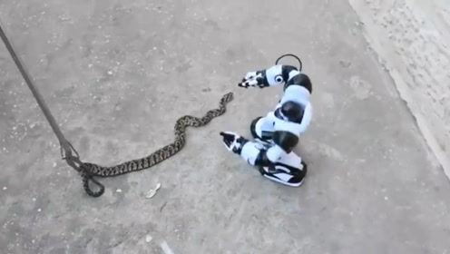 小伙让机器人表演抓蛇,20秒后,正是霸气的开始!