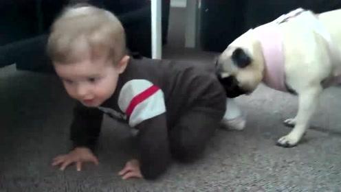 宝宝一个劲的追狗狗,却被狗子反追在屁股后耍得团团转,太可爱了