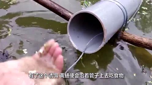 """印度大兄弟发明黄鳝""""诱捕器"""",人人都能操作,3块钱造一个"""