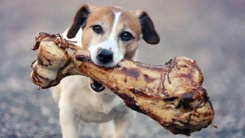 狗每次吃骨头都躲起来,男子觉得不对劲,悄悄跟踪后看傻眼了!