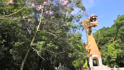 丰顺有条中华第一龙,长318米,高3米,游客可走进龙身去探险