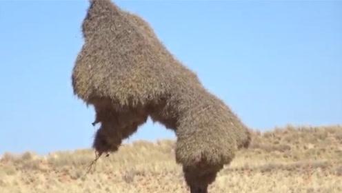 """高压线上惊现""""大草垛"""",仔细一看都被吓到了,这货竟然是个鸟巢"""