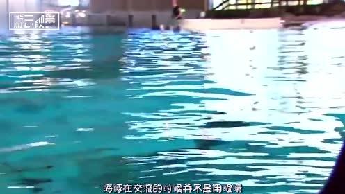为啥海豚会这么喜欢人类,原来在海豚的脑海里,我们是这样子的