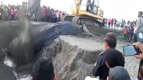 沙滩惊现巨大生物,游客慌忙报警,警察看到后瞬间惊呆了!