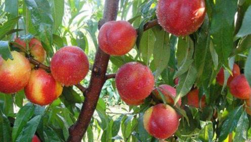 吃完桃子后千万不能碰它,否则就是滋养癌细胞,别不当回事!