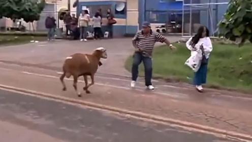 羊把女子撞到在地,男子想要英雄救美,结果啪啪打脸