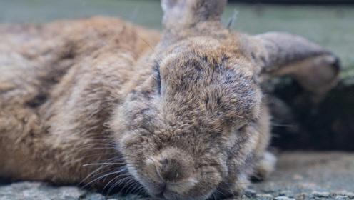 日本北陆的可爱兔兔都在这里了:带来好运的加贺兔乡