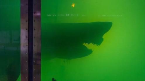 偷潜入废弃动物园,地下室竟然深藏大白鲨干尸!镜头记录诡异瞬间