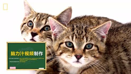 探秘:我们一起学猫叫 喵~喵~喵