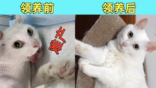流浪猫被收养一年后的变化,晋升大姐大还往家里带小野猫!