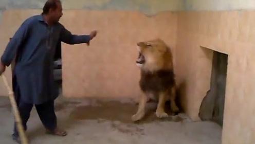 史上最牛饲养员,打狮子就像打儿子,狮子:给我留点面子行吗