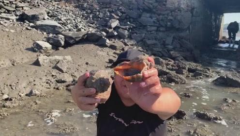 好多海螺从养殖场排放出来,大胖赶海疯狂捡漏,直呼今天发达了