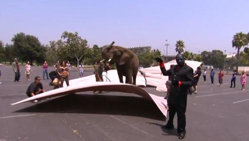国外有名的魔术师凭空变出大象,看到真相以后,感觉智商受到挑战