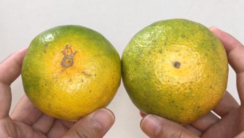橘子甜不甜,看一眼这里就知道,一挑一个准,个个皮薄肉甜