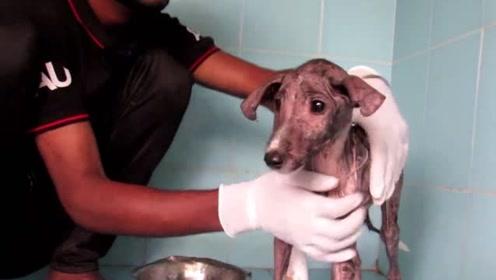 被病痛折磨的可怜流浪狗,它该怎样生活下去呢?结局超暖心!