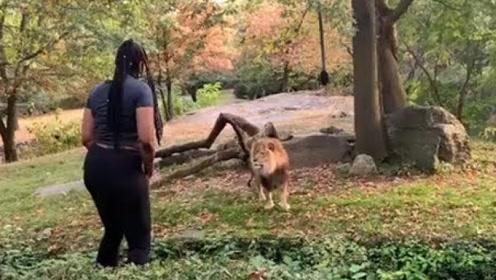 国外一女子闯进狮子馆,与狮子面对面对峙,看着冷汗直冒