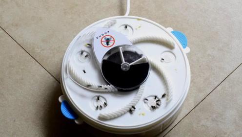 3个超实用的灭蝇设备,最强一天能消灭4000只