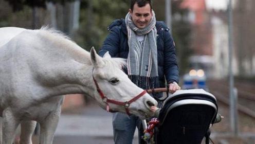 德国街头白马独自散步14年,每天相同路线,警察:不用管它!