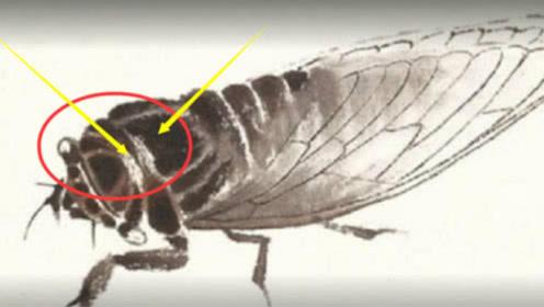 齐白石画的一只蝉,为何能值8亿?放大十倍后,专家说不出话了!