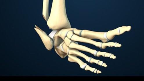 骨折后骨头是如何复原的?看完长知识了!