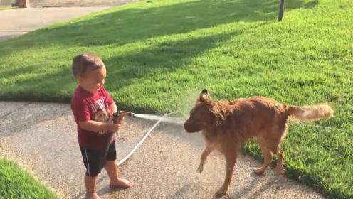 小宝宝和二狗子玩水,狗子被虐千百遍,仍是待主如初恋,不离不弃