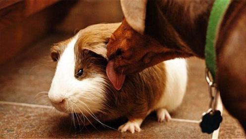 10月13日起,属鼠的朋友当心了!三喜临门,好运一触即发!
