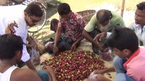 印度拿中国特产种植,却成为全球第二大生产基地,每年都赚几百亿