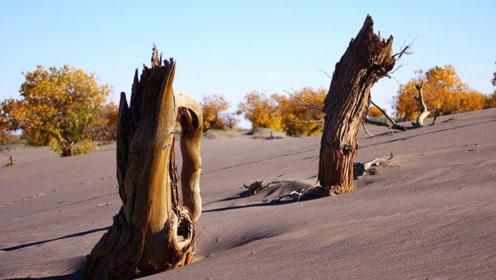 只要靠近就会倒霉的怪树,家畜会死人会生病,专家:过敏而已!