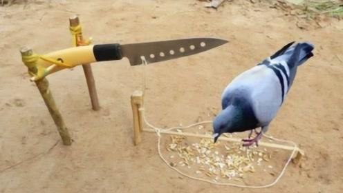 牛人用小刀自制捕鸟器,切下去的瞬间,网友直呼:太残忍!