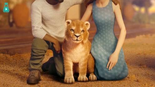 一只认为自己幸福的小狮子,看似快乐的生活,却是悲伤故事的开始