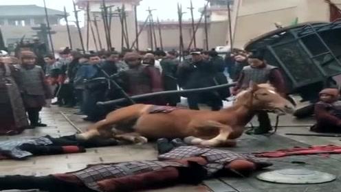 拍了几十场阵亡戏,连马都拍出经验了,主动卧地倒下!