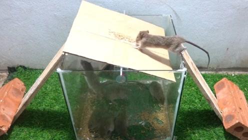 哪个缺德鬼发明的捕鼠器,捕鼠过程让人乐开了花,太有才了