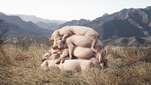美国为什么能成为养猪第一大国?看他们是怎么处理猪粪的,你就明白了