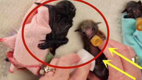 国外奇葩老奶奶养蝙蝠,过程甚是可爱,这也太好玩了吧!