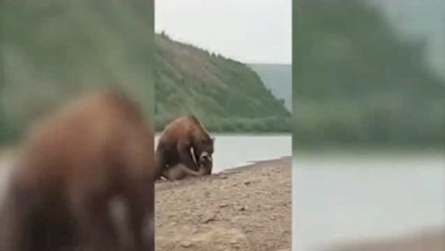 俄罗斯渔民吓跑棕熊帮海豹逃过一劫
