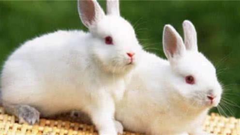 """属兔人要""""留神""""了,10月将会有大惊喜,生活富足无忧!"""