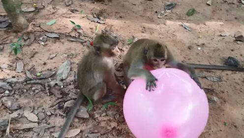 猴子抢走女孩的气球,正高兴的时候,意外的事情发生了