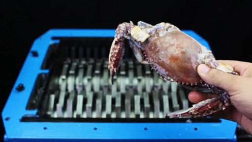 男子将螃蟹扔进粉碎机,看到螃蟹的下场,太解压了!