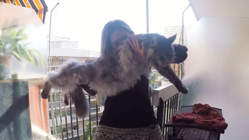 美女救下巨无霸猫咪,6年来,发现越长越不对劲,现在已是这番景象了!