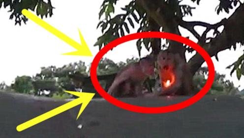 老外给猴子扔了打火机,2秒后老外肠子都悔青了,镜头拍下全过程!