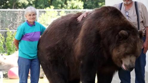 男子背着女友与熊同居,女友知道后竟然带着眼泪与其同居