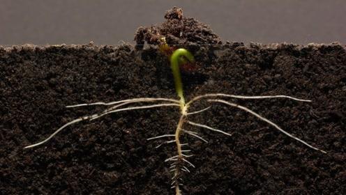 一颗种子的生命力有多强?老外用摄像机记录下来,忍不住要点赞了