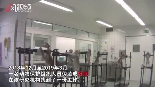 动物保护者卧底德国毒理学实验室 猴子被捆绑猫狗奄奄一息