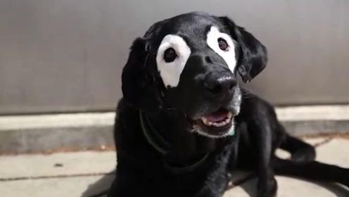 同病相怜的狗狗,帮助白癜风男孩而重拾信心,这都是命中宿命吧