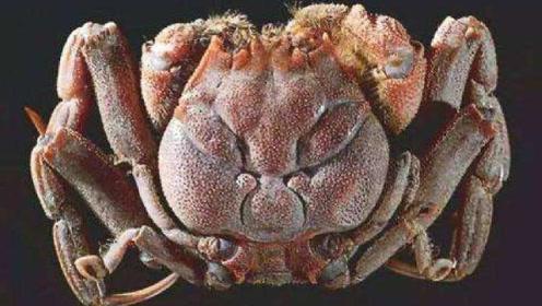 """小伙海边发现""""人脸螃蟹"""",长相怪异,老渔民说出其真实身份!"""