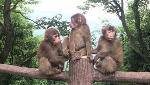 """猴子夺游客打火机""""开火"""",转头把自己毛烧了,镜头记下精彩瞬间"""